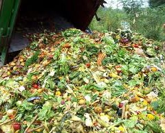 Why Food Waste is a good thing!