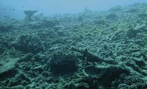 Reef damage