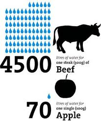 Water use of beef and apple