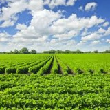 Follow the Food Chain: Growing Crops