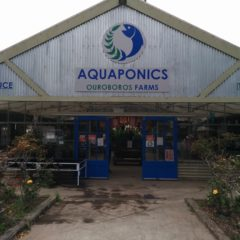 Visiting an Aquaponic Sustainable Farm